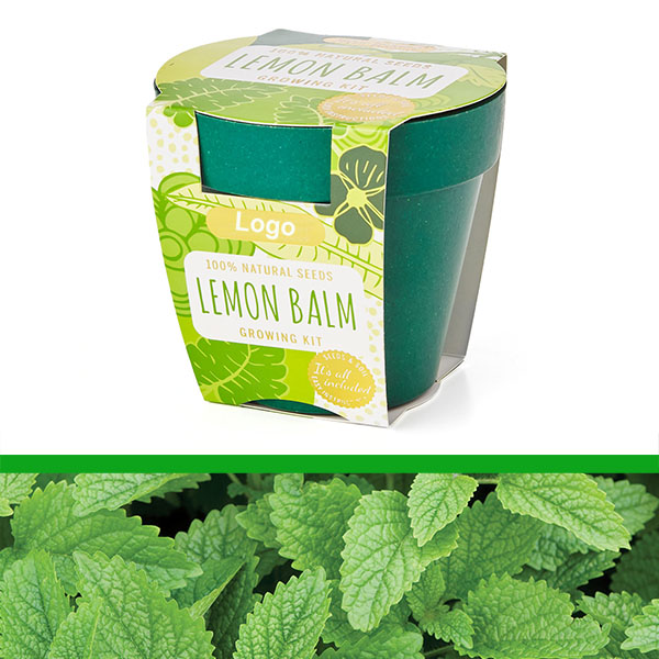 GrowIT - Plant in a pot - Lemon Balm  (PG0842b)