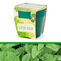GrowIT - Plant in a pot - Lemon Balm