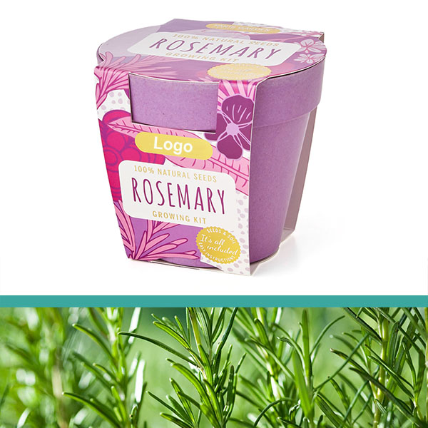 GrowIT - Plant in a pot - Rosemary