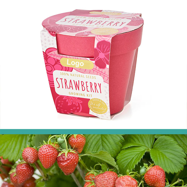 GrowIT - Plant in a pot - Strawberry