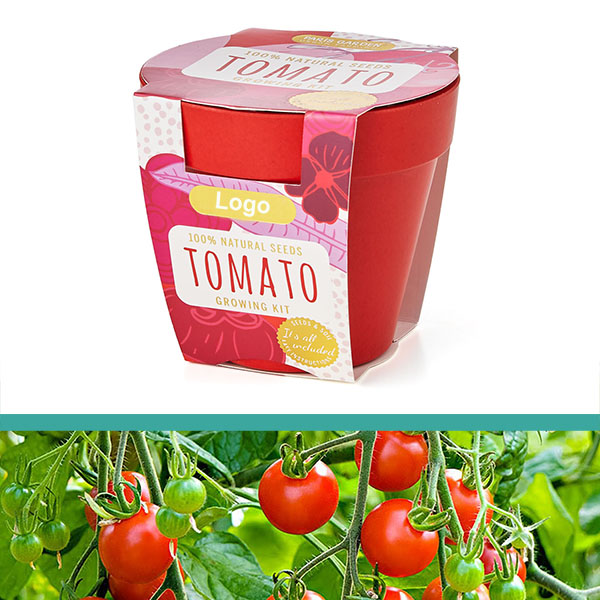 GrowIT - Plant in a pot - Tomato