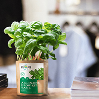 All-in-One Grow Kit (Basil)
